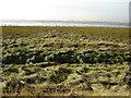 TA2120 : River  Humber  Saltmarsh  and  Mudflats by Martin Dawes