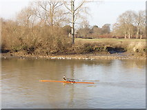 TQ1776 : Sculler on The Thames by Syon House by David Hawgood
