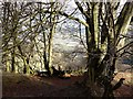 SO2811 : Footpath leading to the Punchbowl, Blorenge by Claire Seyler