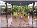 SU6756 : A very damp garden centre by Given Up