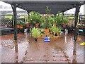 SU6756 : A very damp garden centre by Sandy B