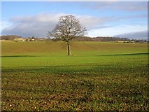 SO7334 : The flood plain of the Glynch Brook by Bob Embleton