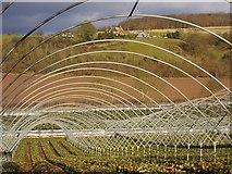 SO7334 : Polytunnels near the Pepper Mill by Bob Embleton