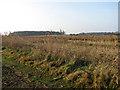TG4622 : Marsh pastures beyond drain by Evelyn Simak