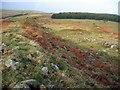 NT9921 : Iron Age fort  above Southmiddleton Dean by Andrew Curtis
