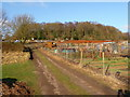 SO9773 : Allotments on southern slope of Lickey Hills. by Mike Dodman