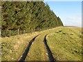 SO1586 : Forest margin by Jonathan Wilkins