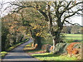 NZ0157 : Track, farmland and woodland near Healey Hall by Mike Quinn