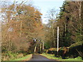 NZ0158 : Track in the plantation near Corf Gate by Mike Quinn