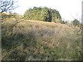 SO1584 : Conifer screen by Jonathan Wilkins