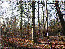 SO5812 : Forest of Dean near Edge End by Stuart Wilding