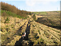 SD9509 : Footpath ascending Brushes Clough by Jonathan Wilkins