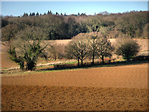 SU7824 : Farmland to the west of Sussex Border Path by Chris Gunns
