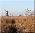 TG4520 : A glimpse of the River Thurne by Evelyn Simak