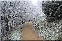 SO7641 : Path splits, Black Hill by Bob Embleton
