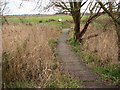 TG4522 : A boardwalk through the reeds by Evelyn Simak