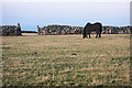 SW4336 : Field at Bosporthennis by Bob Jones