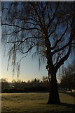 SP0343 : Tree in Abbey Park, Evesham by Philip Halling