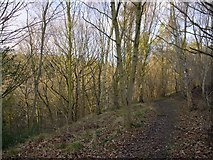 NZ0765 : The strip of ancient, semi-natural woodland clinging to the edge of Whittle Dene by Andrew Curtis