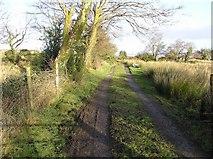 G9940 : Lane at Laghty Barr by Kenneth  Allen