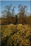 SO8843 : Footpath into Croome Park by Philip Halling