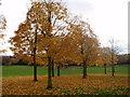 SO9693 : Jubilee Park in Autumn by M BIRT