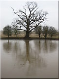 SO8843 : Winter trees, Croome Park by Philip Halling