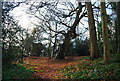 TQ5839 : Princess Anne's Oak, Tunbridge Wells Common by N Chadwick