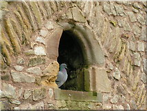 ST5394 : Chepstow castle resident by andy dolman