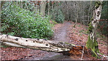 SU8529 : Blocked track in Lower End Plantation by Shazz