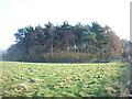 NZ2647 : Forestry near Viewly Grange by Freethinker