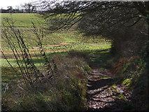 SU7824 : Sussex Border Path by Chris Gunns