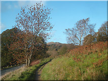 SO7643 : Autumn colour at Upper Colwall by Trevor Rickard