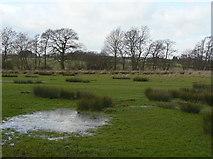SK0425 : Marshy ground by Alan Murray-Rust