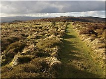 ST1734 : Path on Lydeard Hill by Derek Harper