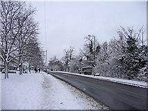 TQ2996 : Bramley Road, London N14 by Christine Matthews