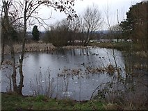 ST1477 : Pond in Fairwater Park, Cardiff by John Lord