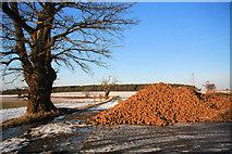 TL8063 : Pile of sugar beet by Bob Jones