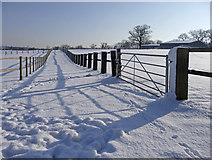 TQ2996 : Bridleway between the fields, South Lodge Farm, Enfield by Christine Matthews