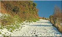 J4772 : Scrabo snow scenes, Newtownards (2) by Albert Bridge