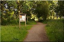 TQ2353 : Path junction on Banstead Heath by Ian Capper
