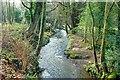J4682 : The Crawfordsburn, Crawfordsburn Country Park by Albert Bridge