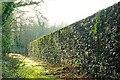 J4682 : Old wall, Crawfordsburn Country Park by Albert Bridge