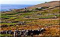 B8131 : Hillside with stone walls & field near Brinlack by Suzanne Mischyshyn