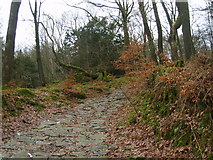 SD3898 : Woodland Path by Michael Graham