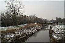 SJ5990 : Sankey Brook, looking South from Cromwell Avenue by David Long