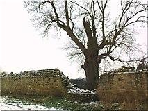 SE2768 : An Ancient Ash by Matthew Hatton