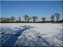 TL9357 : Shadows and snowy fields by Alison Rawson