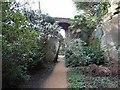NZ0878 : Quarry Garden at Belsay by Oliver Dixon
