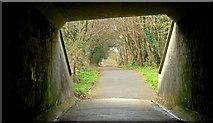 J2967 : The Lagan towpath (5) by Albert Bridge